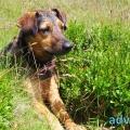 066-Veggie DogDays 2015