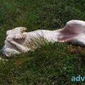 126-Veggie DogDays 2015