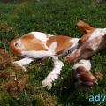 127-Veggie DogDays 2015