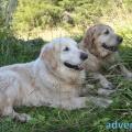 020-Veggie DogDays Obernberg 2014