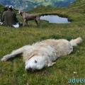 027-Veggie DogDays Obernberg 2014