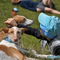 029-Veggie DogDays Obernberg 2014