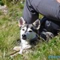 030-Veggie DogDays Obernberg 2014