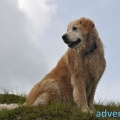 035-Veggie DogDays Obernberg 2014