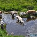 040-Veggie DogDays Obernberg 2014