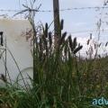 052-Veggie DogDays Obernberg 2014