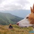 055-Veggie DogDays Obernberg 2014