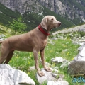068-Veggie DogDays Obernberg 2014